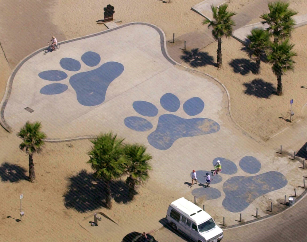 Dog Beach from the air. There's no question about who rules this roost!  Photo by John Gibbons.
