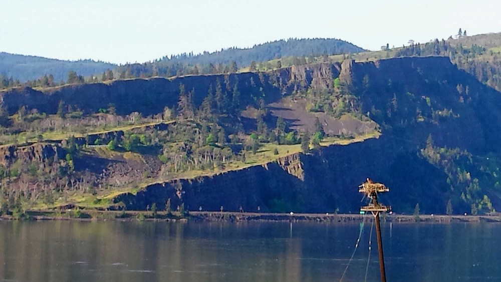 Yes, that is a REAL bald eagle nesting on top of the telephone pole there in the lower right. At 14 pounds, I am eagle bait, so I, for one, am glad that nest is in the distance. The important thing is that our own national bird lends cred to our Columbia Gorge National Scenic Area.