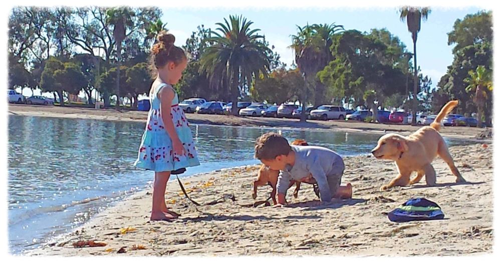 Mission Bay near the Bahia Hotel - human and dog kids romp after a pup SUP session