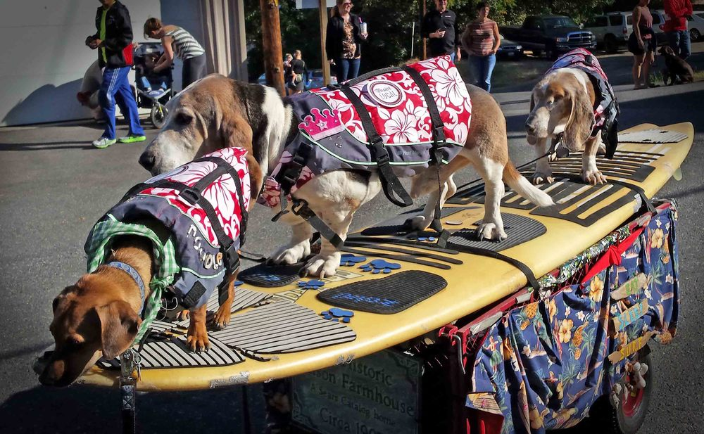 Mosier 100 parade SurfDogs.jpg