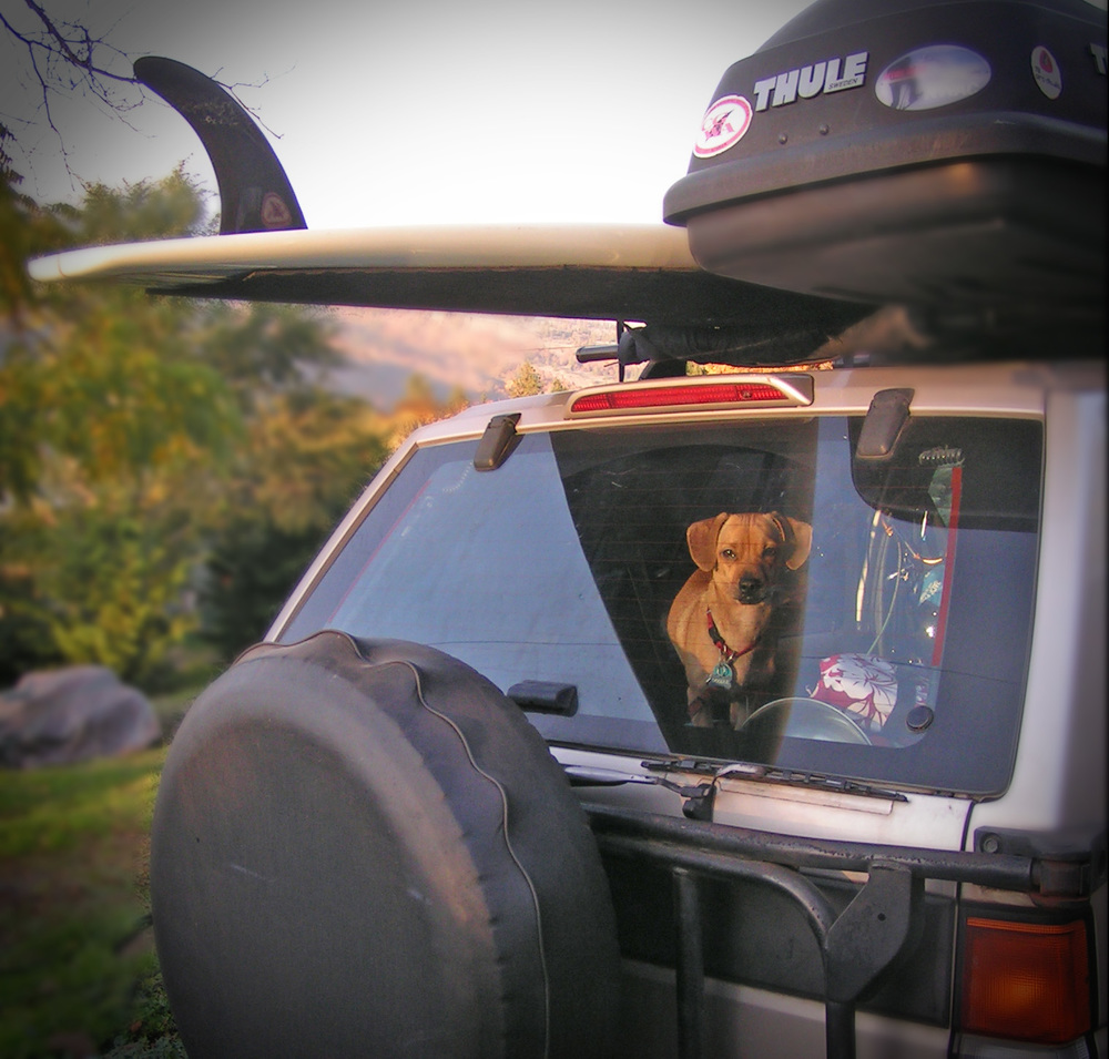 Road trips = discovery!  = adventure = life!     For writer dogs, like me.