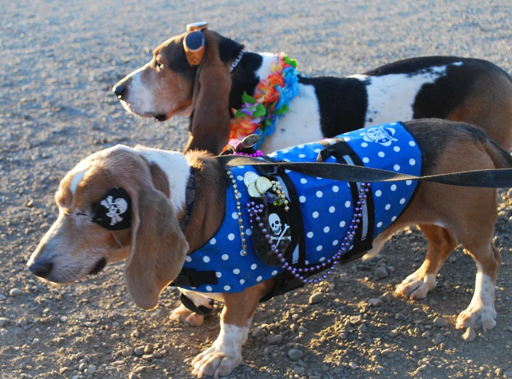 Dude and Elvis, partners in life and surfing -with or without eyes.