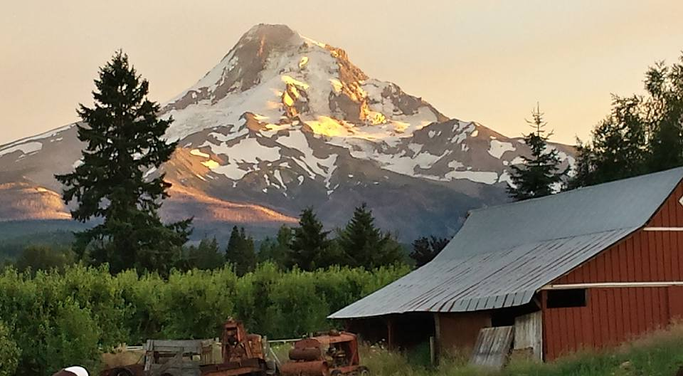 Isn't this an awesome place we live in? This is a farm in Parkdale in the upper Hood River valley, which is pear central. Fruit grows here under the watchful eye of Mt. Hood.   Photo copyright Barb Ayers DogDiary.org