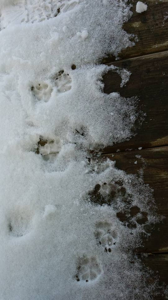 My toes on the nose of our front porch last December.   Photo copyright Barb Ayers DogDiary.org