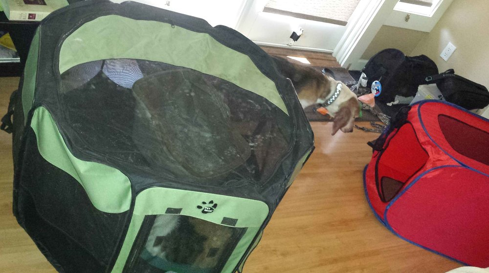 On the left - the large hexagon playpen - cat condo.  On the right, inexpensive fold out pet crates for the dogs - one for each in transport and temporary holding. If you can't let the dogs out in the shelter, use folding pet fences or a folding playpen. If you have a trailer or motorhome, you are golden - evacuation central.   (Photo: Our June oil rain derailment evacuation)       Photo (c) Barb Ayers