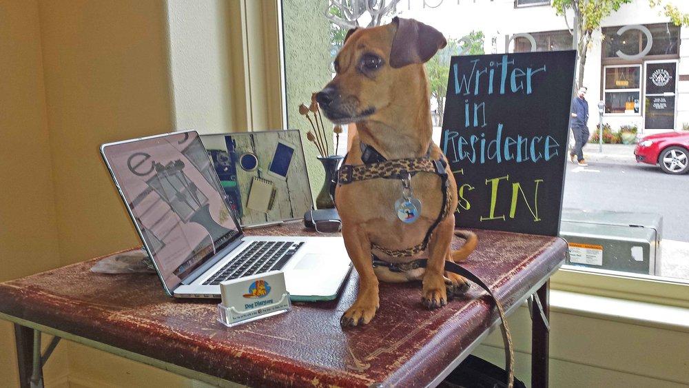 Writer in residence is in.jpg