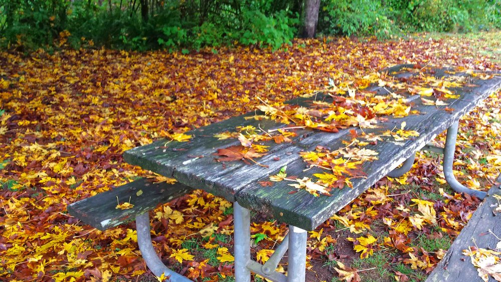 Oregon: crazy leaf season                         Photo: (c) Barb Ayers DogDiary.org
