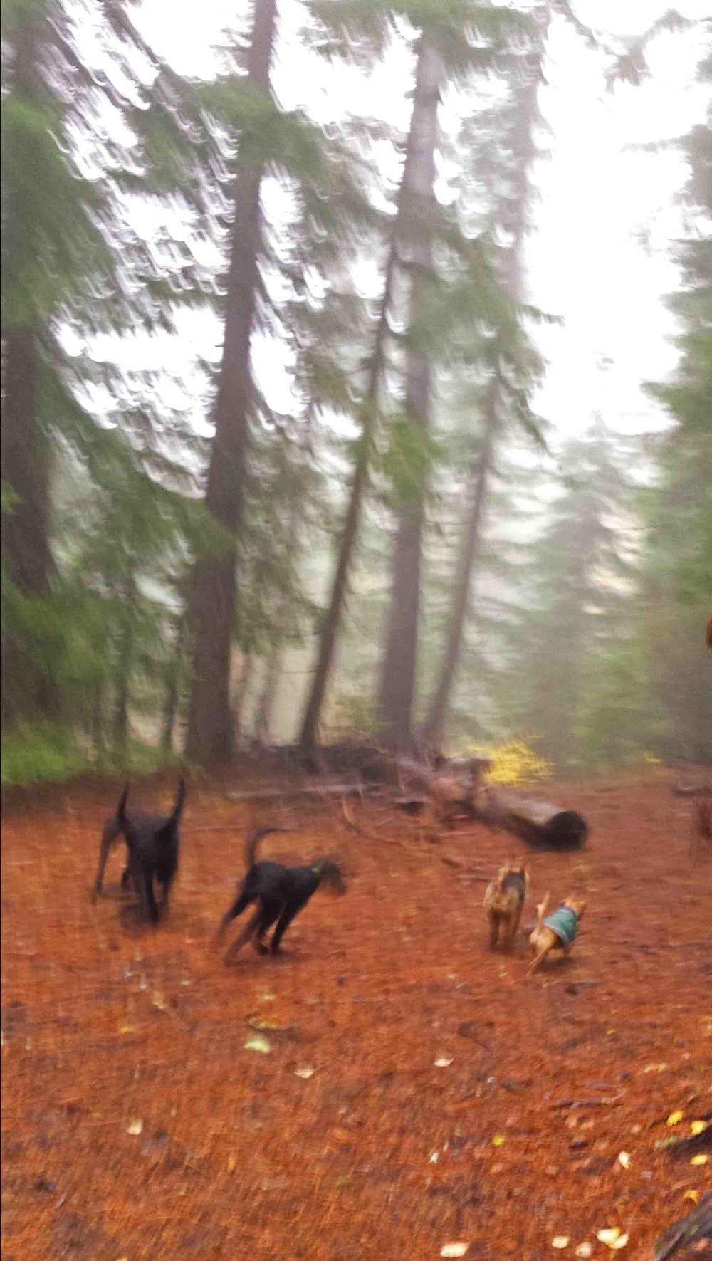 Outdoor dog fun in the Gifford Pinchot National Forest - near Trout Lake, WA   Photo: (c) Barb Ayers, DogDiary.org
