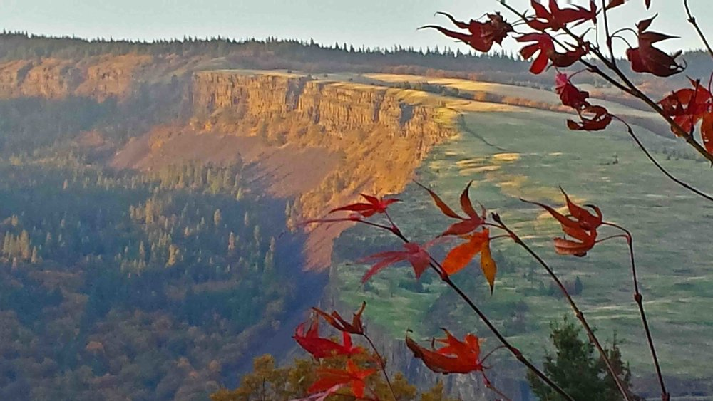 Fall view in the front yard - Coyote Wall syncline                                                                                             Photo (c) Barb Ayers, DogDiary.org