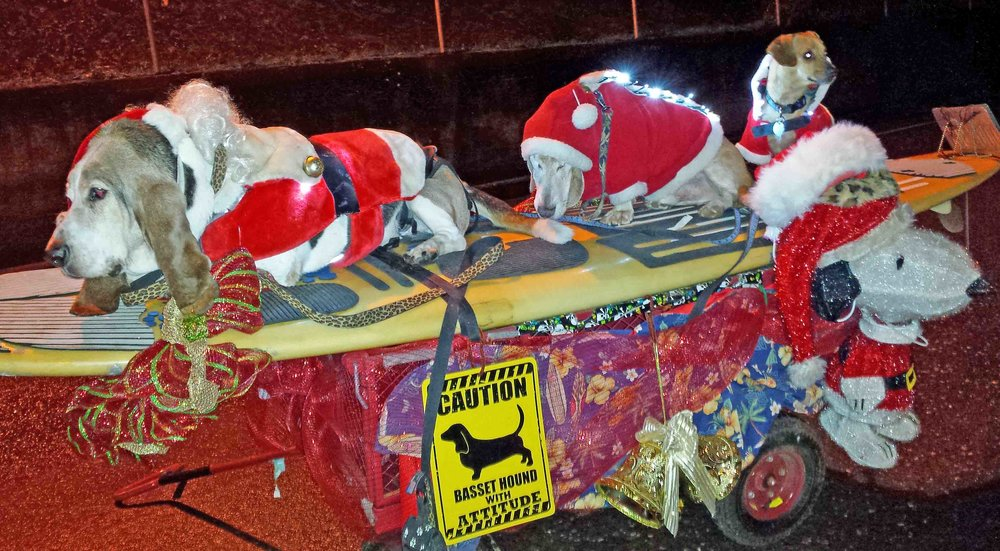 It's a 3 dog night at the Hood River holiday parade with Elvis the nose rider, Dude in the middle next to Snoopy and Doodle on the tail. Photo (c) Barb Ayers, DogDiary.org