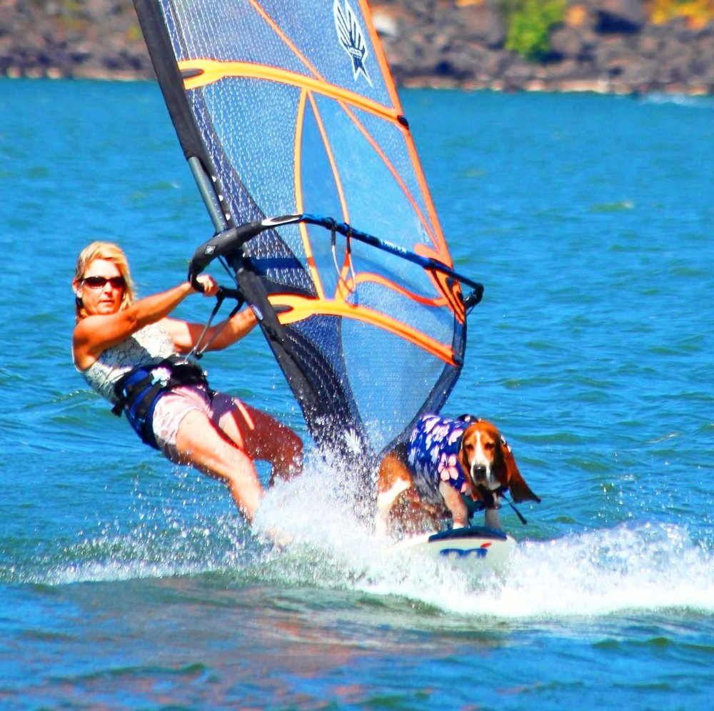 Elvis and I windsurfing the Columbia River Gorge - windsurfing capital of the world.  Photo: (c) Barb Ayers, Surf Dog Diaries, www.DogDiary.org