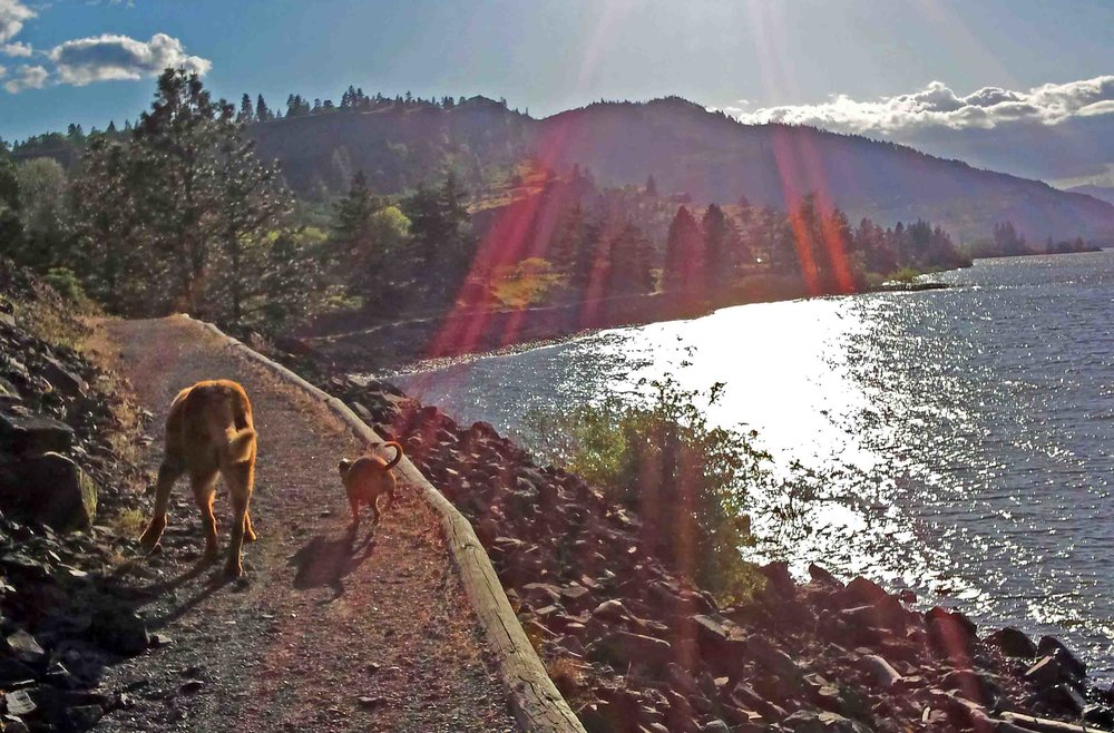 Me and Klaus on the trail in our hometown- Mosier, Oregon     Photo: (c) Barb Ayers, DogDiary.org