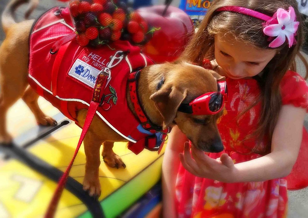 This is why we do parades.  Click on the pix to see the video .  Photo: (c) Barb Ayers, DogDiary.org