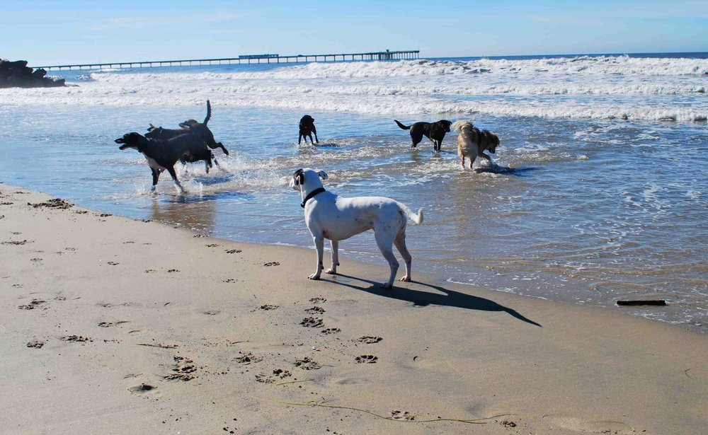 Dog Beach in Ocean Beach - see the resemblance to the top photo, Dog River sandbar?    Photo: (c) Barb Ayers, DogDiary.org