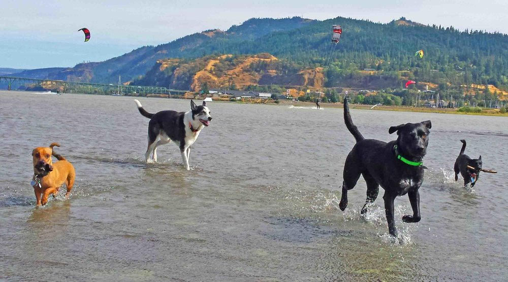 Dog beach at Dog River - where beach dogs and kite surfers hang out. Photo: (c) Barb Ayers, DogDiary.org