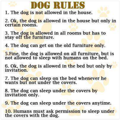 Dog house rules copy.png