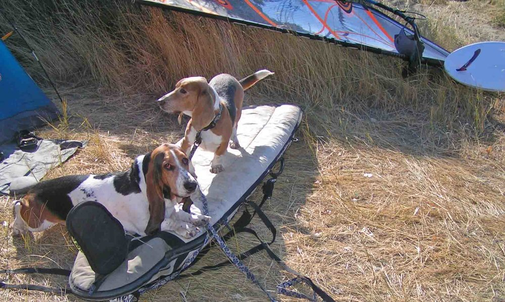 Elvis n Dude like to windsurf! And camp! Like me and all the other human and canine surf dogs we know. Photo: (c) Barb Ayers, DogDiary.org