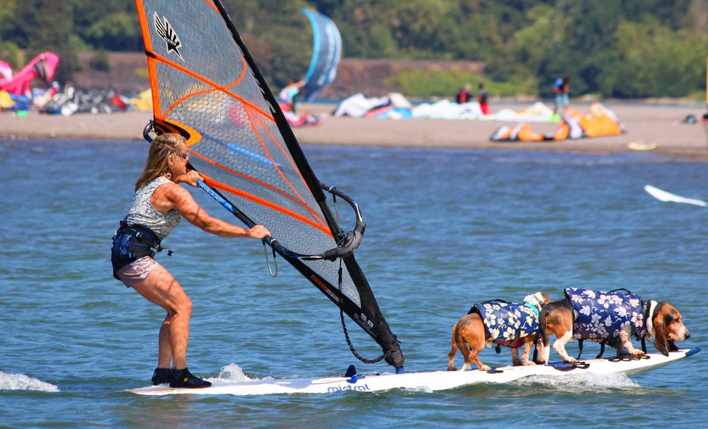 Dude and Elvis windsurf with me at Hood River Event Site - this was before we adopted Doodle. Photo: (c) Barb Ayers, DogDiary.org