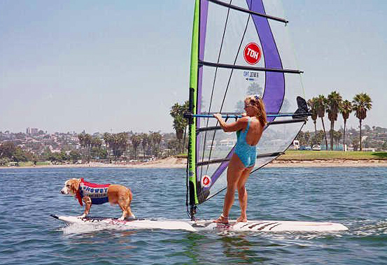 My first surf dog Howdy Doody, windsurfed and surfed with me in San Diego - at OB's Dog Beach and on Mission Bay (pictured here.) Photo: (c) Barb Ayers, DogDiary.org