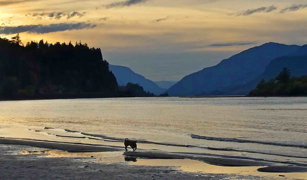 Me on one of my favorite dog beaches in the Gorge.  Photo: (c) Barb Ayers, DogDiary.org