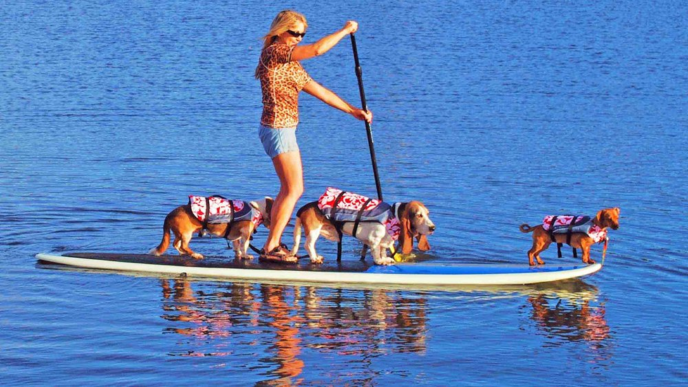 Our  Surf Dog Diaries  family - that's me on the nose.  Photo (c): Barb Ayers, DogDiary.org