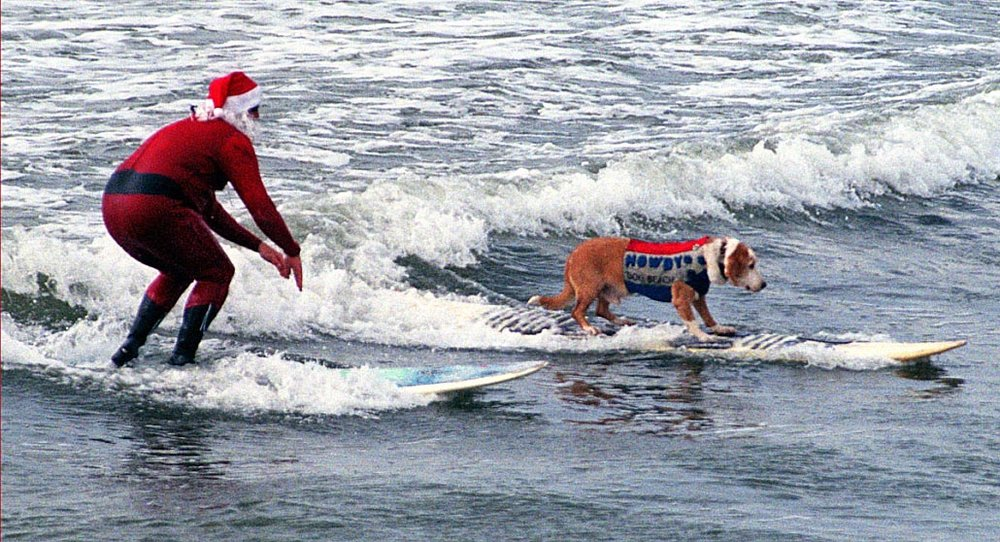 Sandy Claws - was our annual Christmas fundraiser at Dog Beach. Howdy and Santa rocked the surf!!  Photo (c) Barb Ayers, DogDiary.org