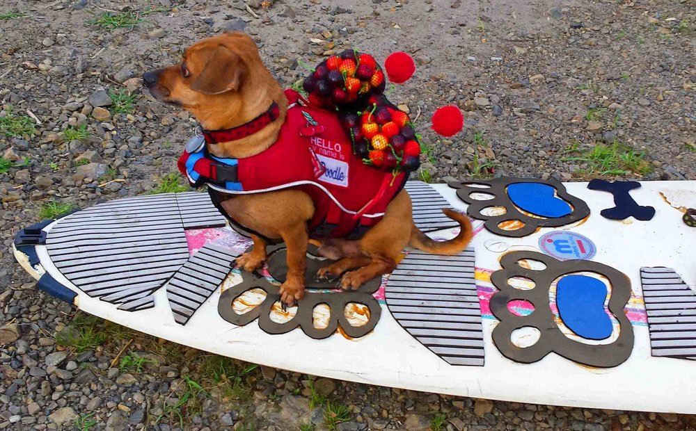 Doxie on 1987 Mistral Superlight - a still life.                                     Photo: (c) Barb Ayers, DogDiary.org