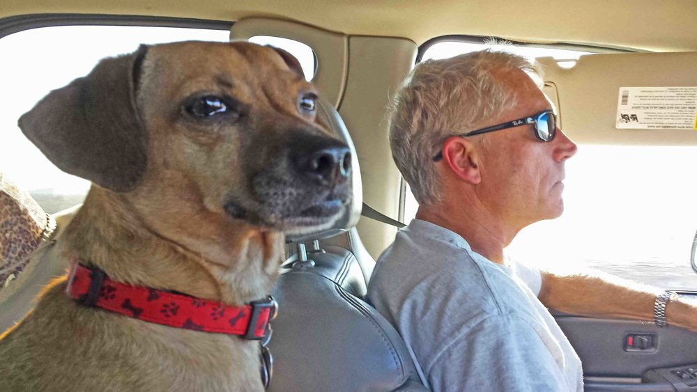 Dudes in the car, river bound.  Doodle and the Prez., Trudge.      Photo: (c) Barb Ayers, DogDiary.org