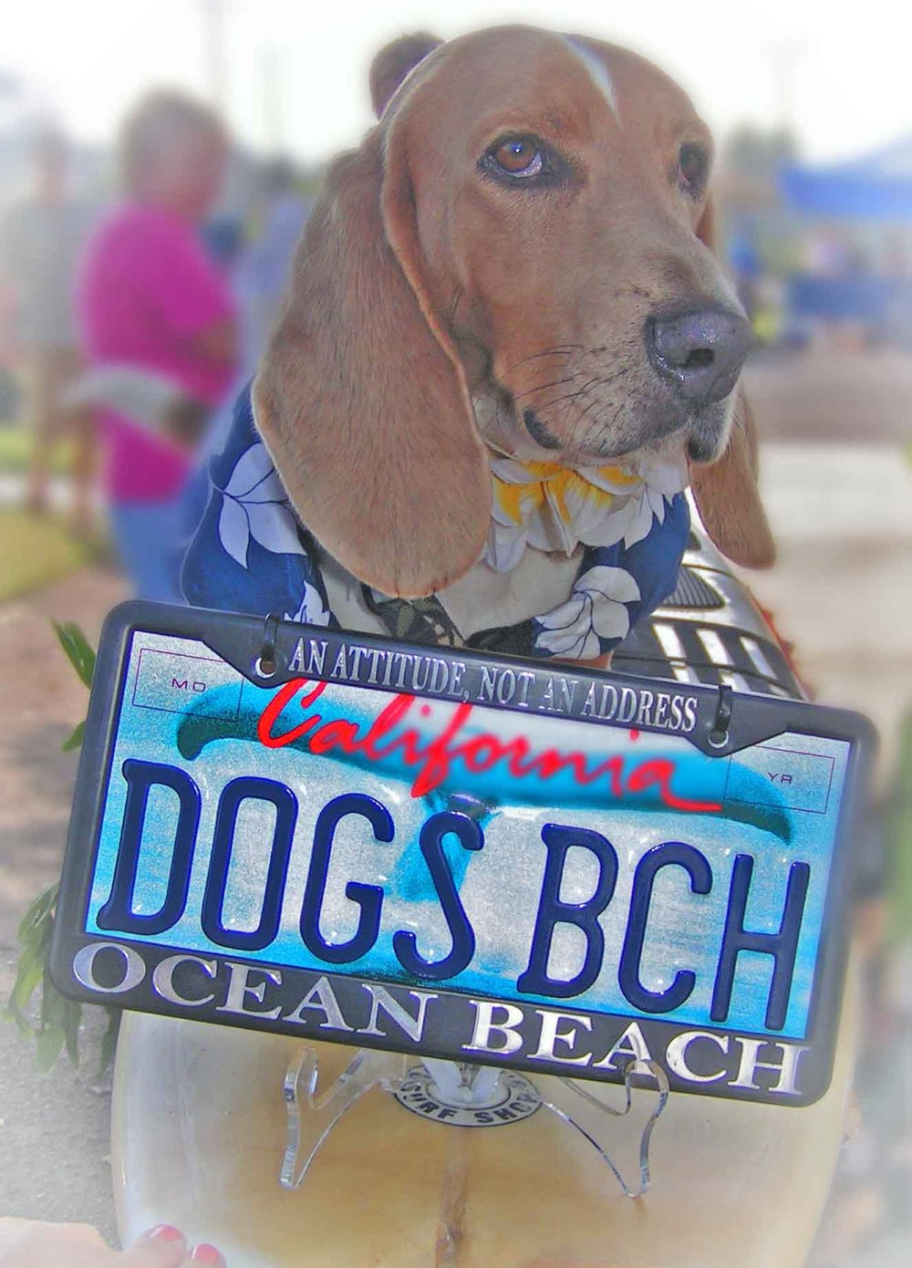 Dude, my 3rd generation surf dog. Named after the late great Howdy Doody, Chair dog of the Dog beach Committee of Ocean Beach Town Council.                         Photo (c) Barb Ayers, DogDiary.org