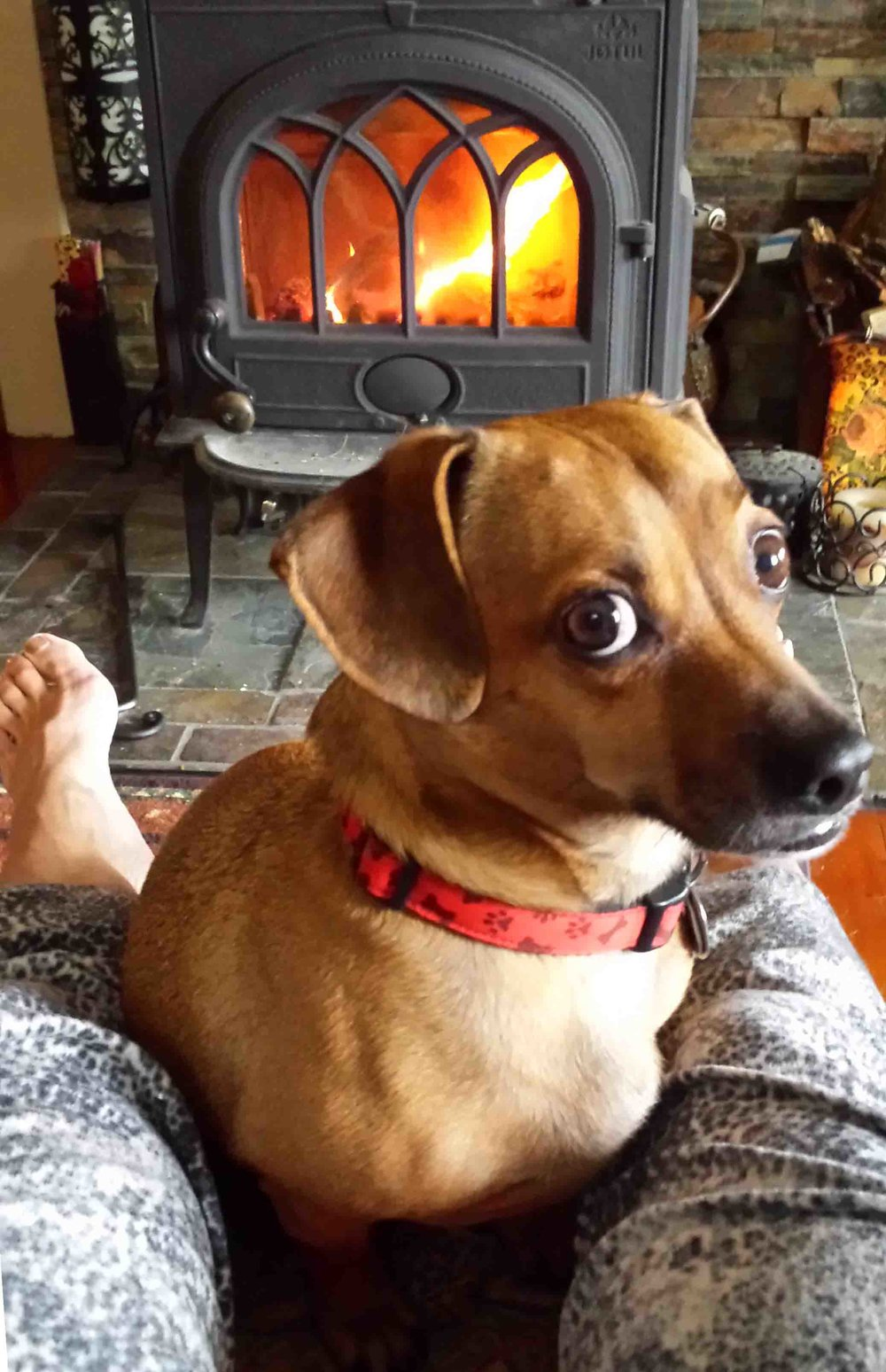 Doodle and I love fireside fall mornings.                  Photo: (c) Barb Ayers, DogDiary.org