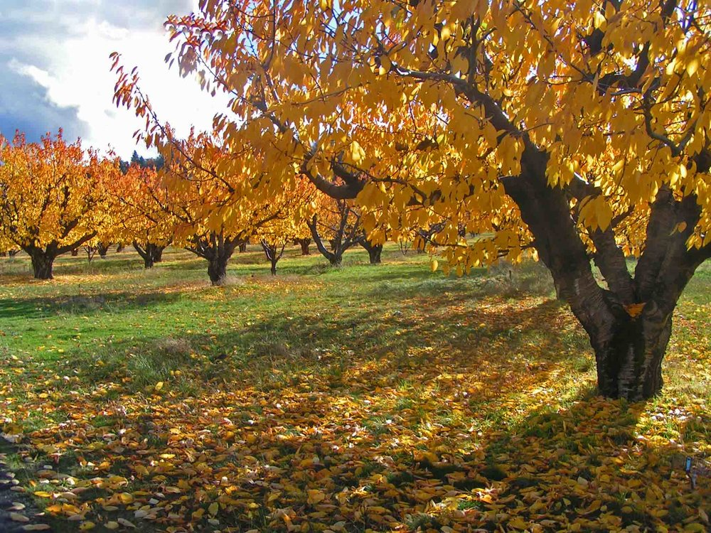 Columbia River Gorge is know for its fresh fruit orchards.Photo: (c) Barb Ayers, DogDiary.org