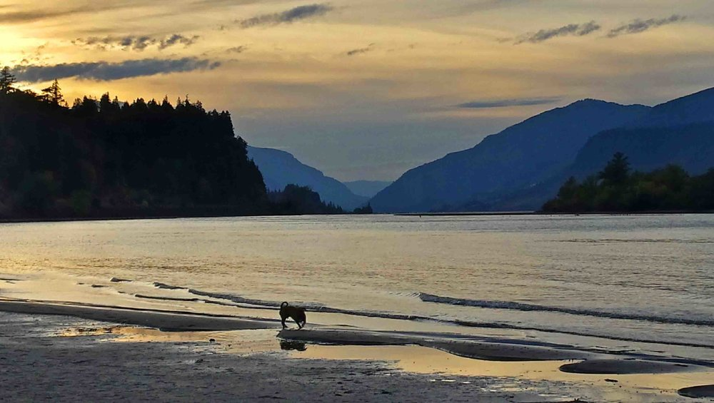Just another ho-hum dog beach in the Gorge.     Photo: (c) Barb Ayers, DogDiary.org