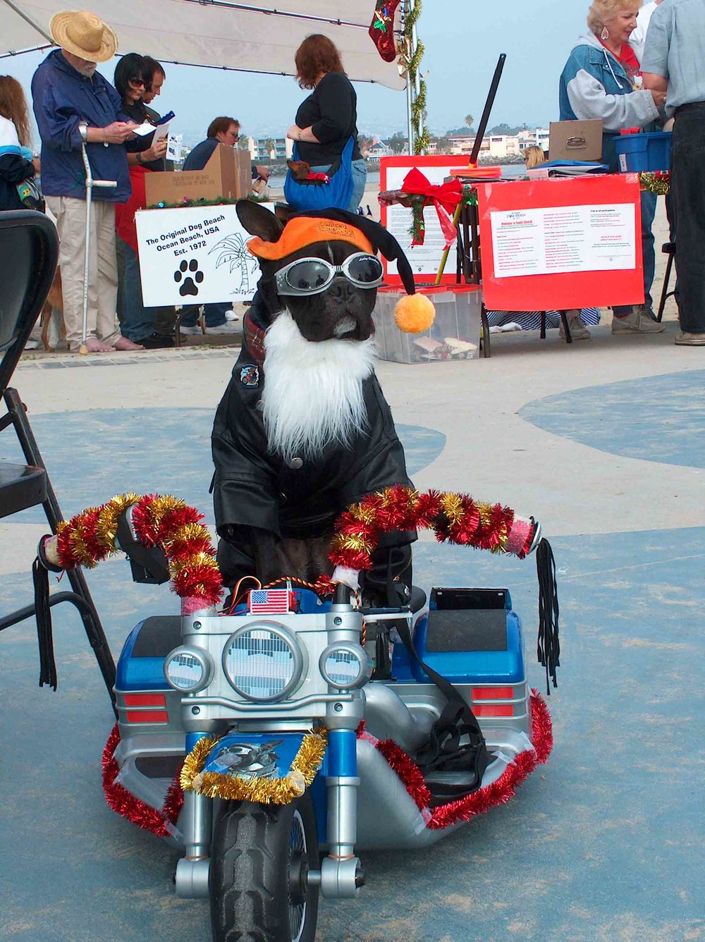 Back in the day, when Howdy still ruled Dog Beach, so did our biker dog friend. This was before surf dog contests were invented.  Photo: (c) Barb Ayers, DogDiary.org