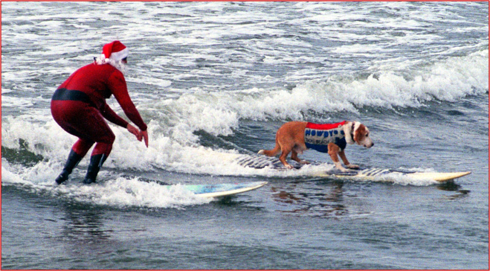 My first surf dog, Howdy Doody, chair dog of the Dog Beach Committee, at Sandy Claws.  Photo: (c) Barb Ayers, DogDiary.org
