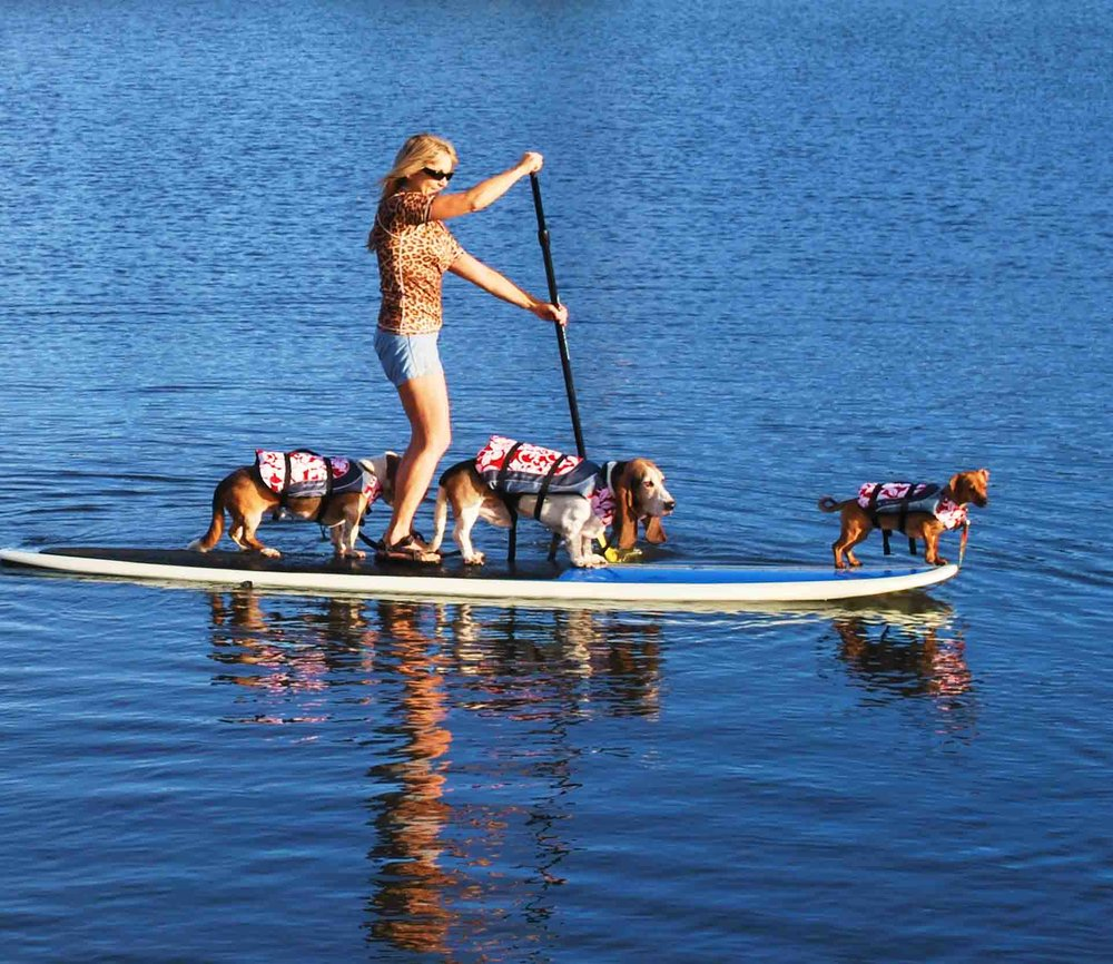 "We call this ""3 pup SUP"". That's me on the nose, with Elvis n Dude and my mom.                       Photo: (c) Barb Ayers, DogDiary.org"