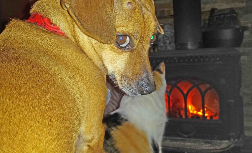 Doodle n Tia by the fire.   Photo: (c) Barb Ayers, DogDairy.org