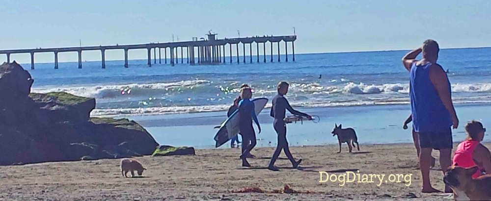 Dog Beach - in Ocean Beach, San Diego, CA. Where the Surf Dog Diaries first began.  Photo: (c) Barb Ayers, DogDiary.org