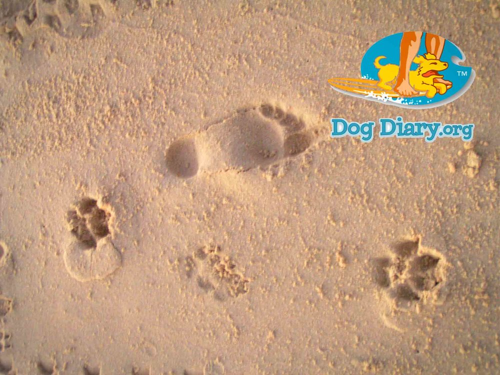 pawprints LOGO placed SMALL and footprints in sand baja_edited-3.jpg