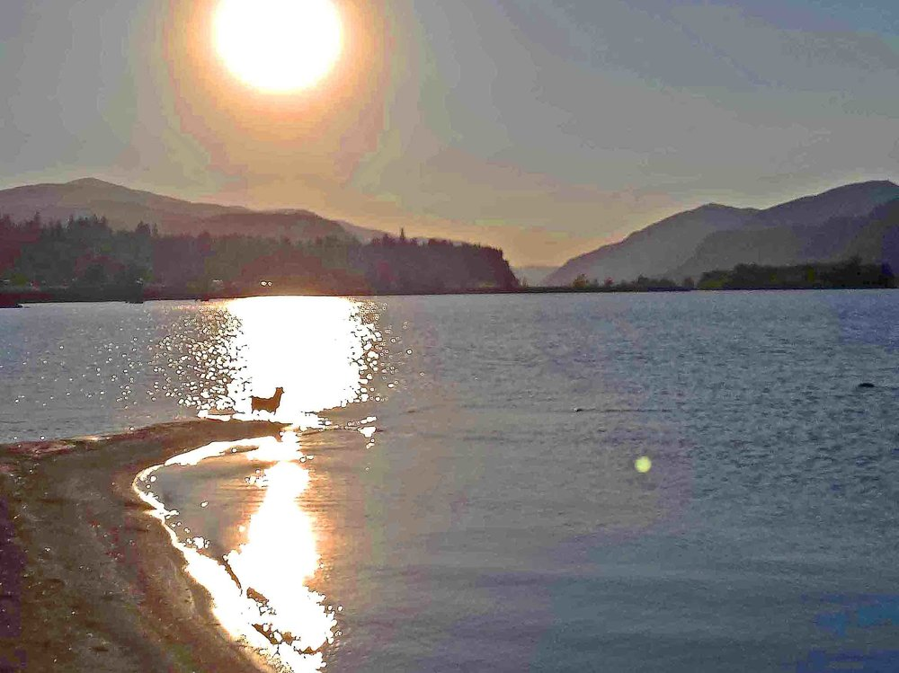 Where dogs and rivers roam- the the Columbia River Gorge.     Photo: (c) Barb Ayers, DogDiary.org
