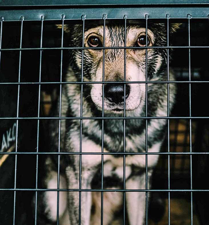 rescue animal.jpg