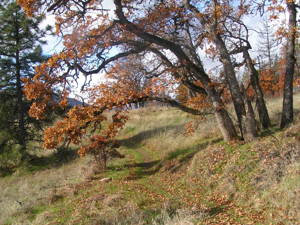 Trail to the Mosier waterfall (Pocket Creek Park.) Photo: (c) Barb Ayers, DogDiary.org
