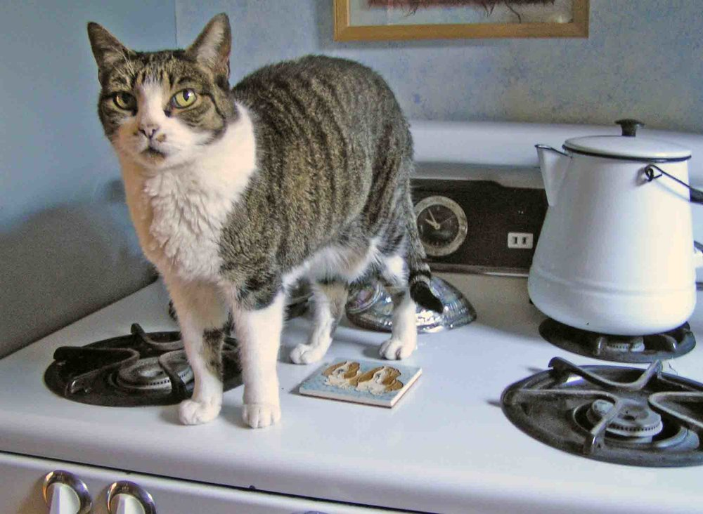 Cat on a hot tin stove. Note the twin basset tile. There was just ONE of me. Photo: (c) Barb Ayers, DogDiary.org
