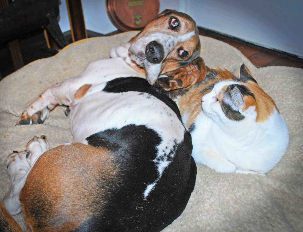 Our eyes met…. Photo: (c) Barb Ayers, DogDiary.org