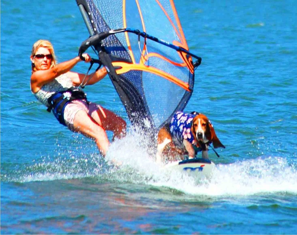 Elvis and our mom, Barb Ayers, windsurf the Columbia River. Elvis's basset brother is behind, on board. Photo: (c) Barb Ayers, DogDiary.org