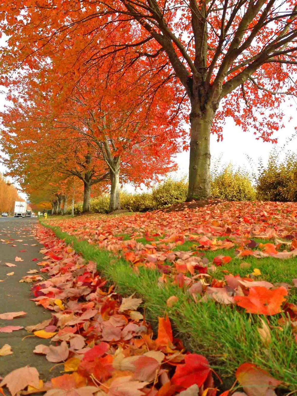 We're changing what we wear ! All those bright colors - the stuff of fall. In Vancouver, WA. The American Vancouver. Photo: (c) Barb Ayers, DogDiary.org