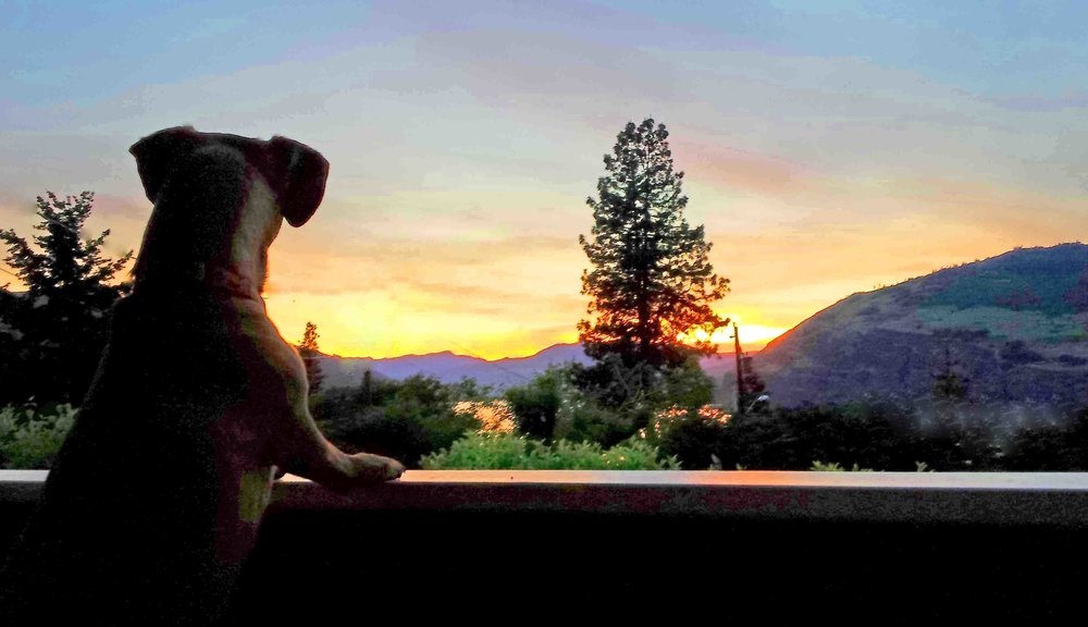 Doodle and Gorge sunsets in our front yard. Not pictured: me (Tia,) or our neighbor hummingbird. Photo: (c) Barb Ayers, DogDiary.org