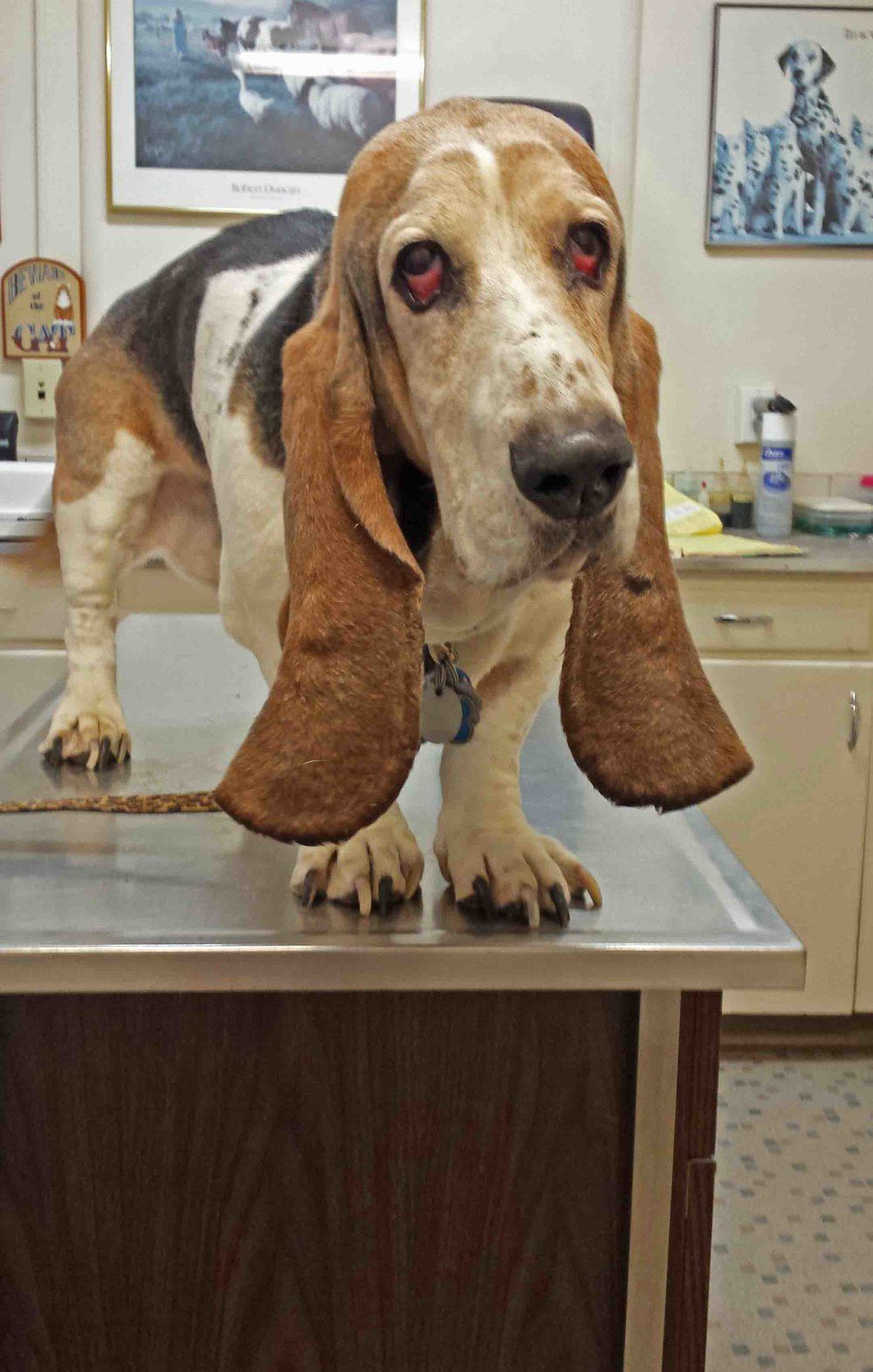 Dearly departed Elvis at the vets. Photo: (c) Barb Ayers, DogDiary.org