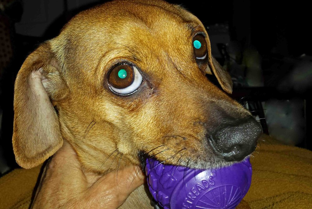 Doodle and his bff Ball. Photo: (c) Barb Ayers, DogDiary.org