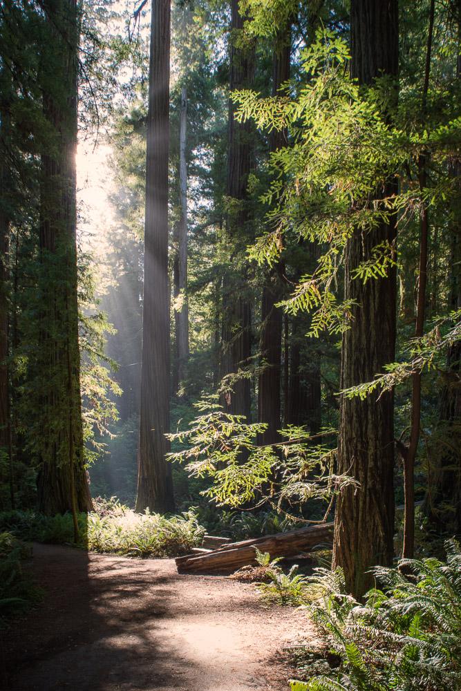 Redwoods-306-Edit.jpg
