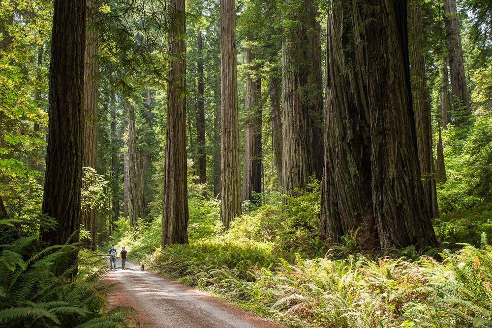 Redwoods-636.jpg